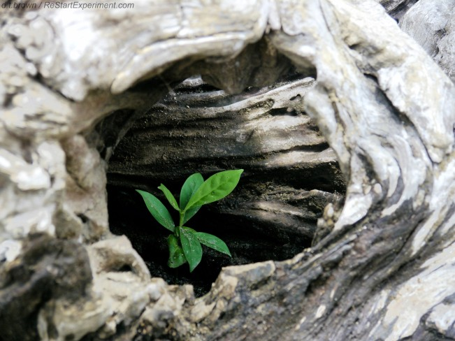 Costa Rica, Osa Peninsula, Seedling inside dead log, Rebirth, D.T. Brown, ReStartExperiment.com