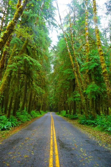 restartexperiment.com, d.t. brown, olympic national park, hoh rainforest
