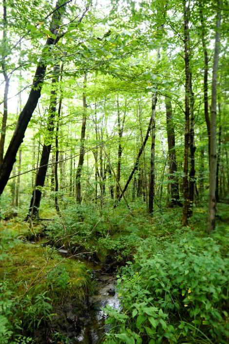 appalachian trail in massachusetts, d.t. brown, www.restartexperiment.com
